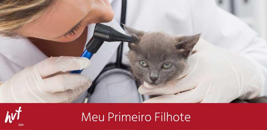 Filhote de gato é examinado pela veterinária